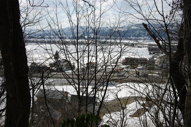 六万騎山の雪割草_201704_NO4