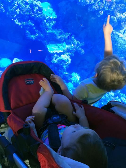 060516_aquarium02