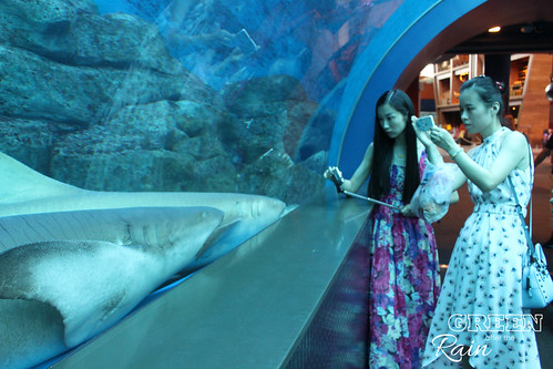 160908d Maritime Museum and SEA Aquarium _066