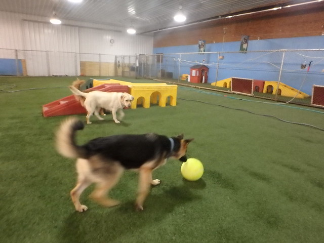03/30/17 Playtime + Tennis Ball + Frisbee Catch :D