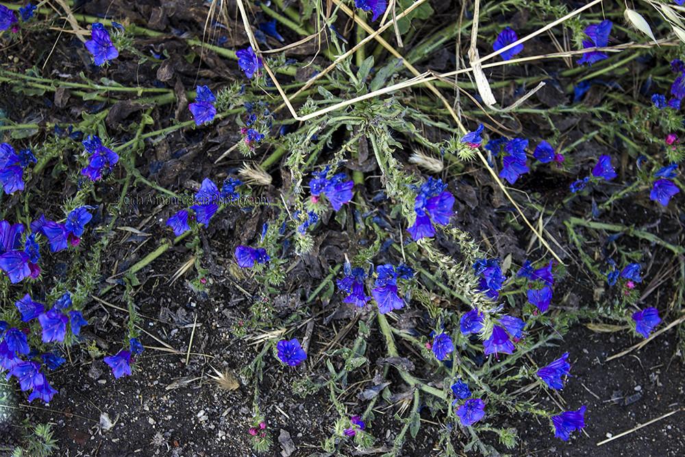 Flores Silvestres De Portugal Cida Garcia Flickr