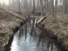 Wolfpen Branch