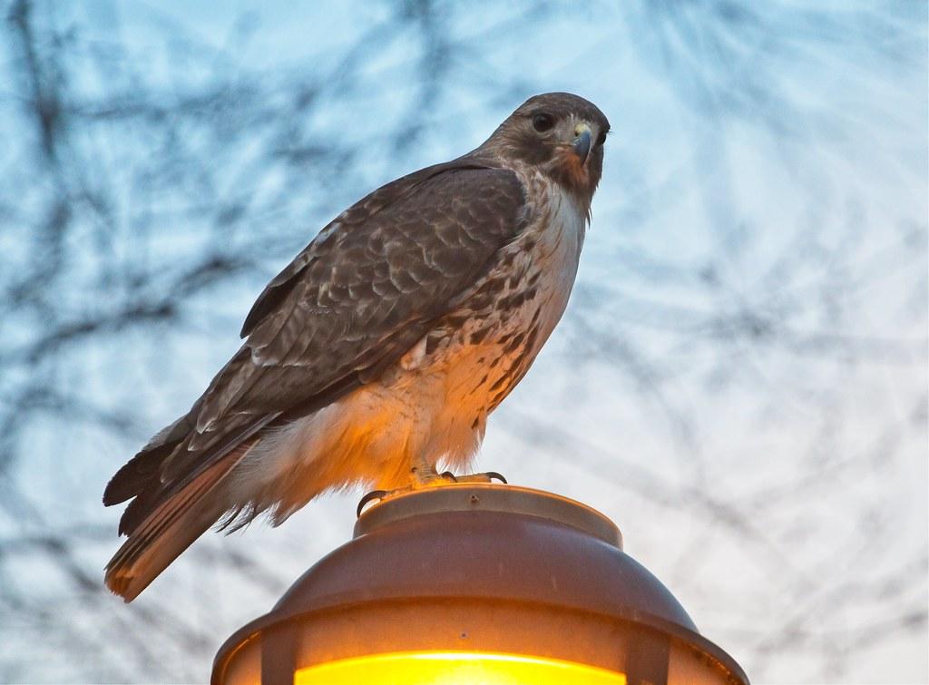 Christo hunts by lamp light