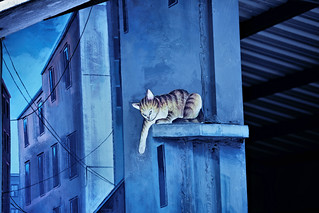 Yuanlin 員林 - Cats on Roof | by RandomIbis2k12