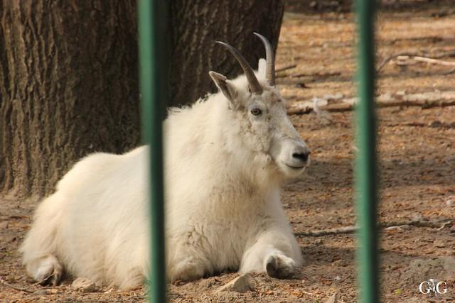 Frühlingstag Tierpark Friedrichsfelde am 02.04.2017108