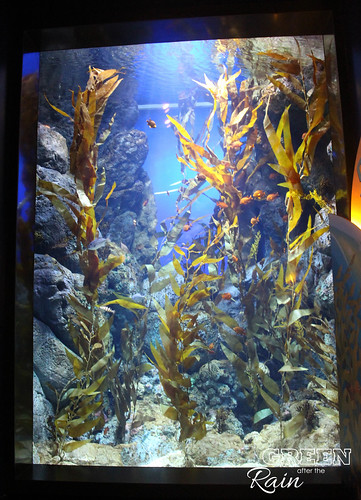 160908d Maritime Museum and SEA Aquarium _167