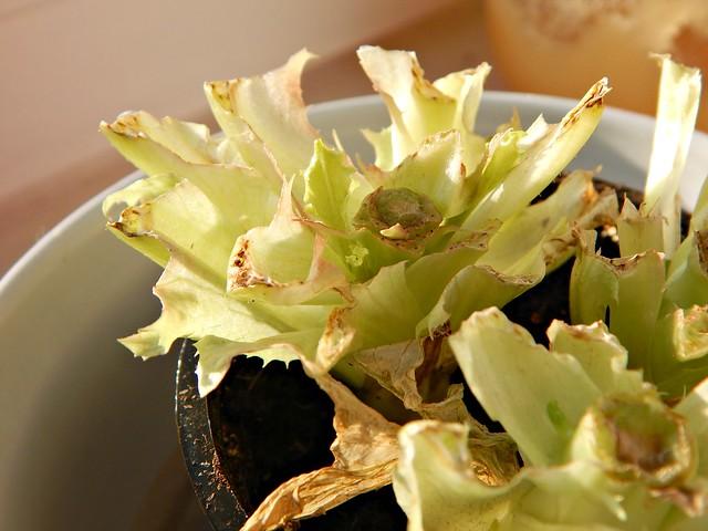 салат - маленькие росточечки