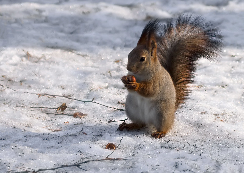 Ms.Squirrel