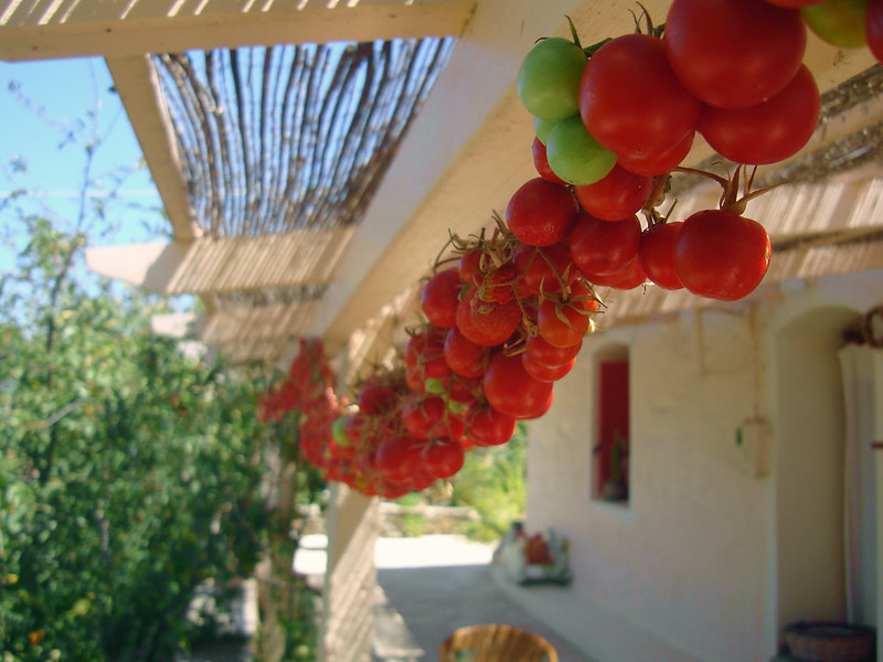 'Cherry tomatoes drying in the sun', by angelos ka on Flickr