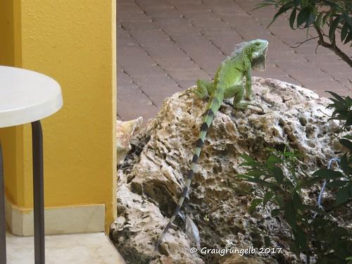 Grüner Besucher
