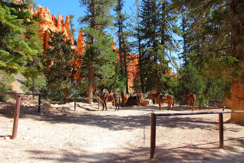 IMG_4678 Mule Ride