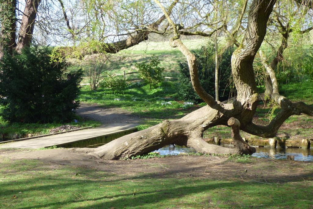 A very weeping willow, gardens of Leeds Castle, Kent. Desi… | Flickr