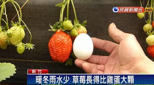鳥の卵より大きいイチゴの実