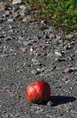 Der Apfel fällt oft weit vom Stamm ...