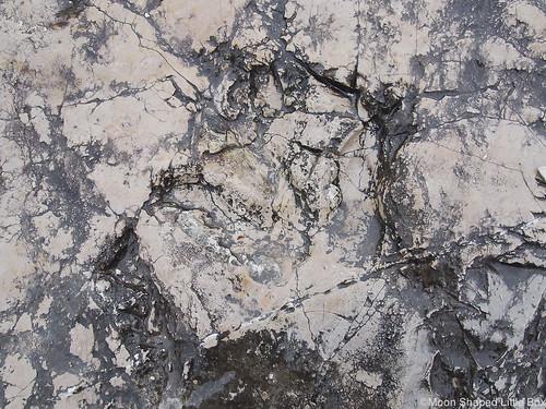 Orme dei Dinosauri Rovereto dinosaur prints in Italy experiences kokemuksia Gardajärvi Italia kohteet Italiassa dinosauruksen jalanjäljet Italia matkablogi matkustus travel visit Italy travelblog Europe