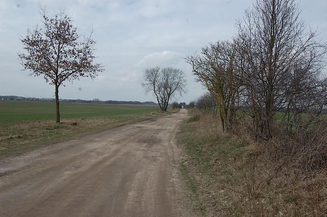 Bild: Ein sandiger Weg mit einer kahlen Hecke