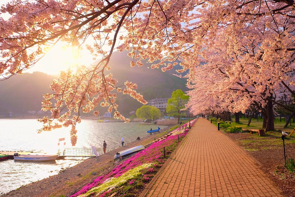 Sakura & Sunset