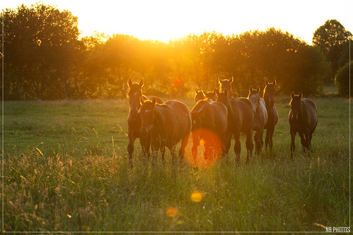 Chevaux | by N. Blondeau