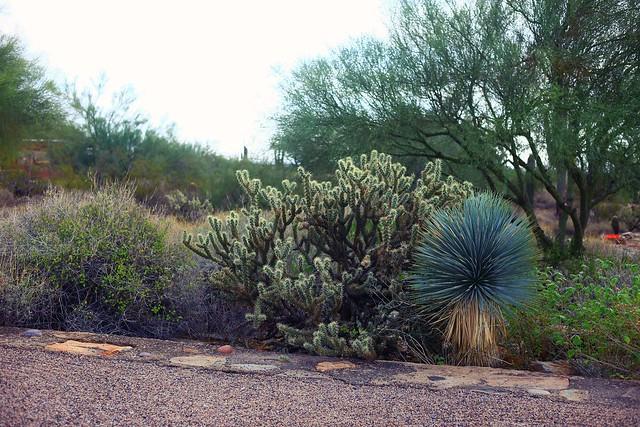 Taliesin West Phoenix Tanvii.com 15