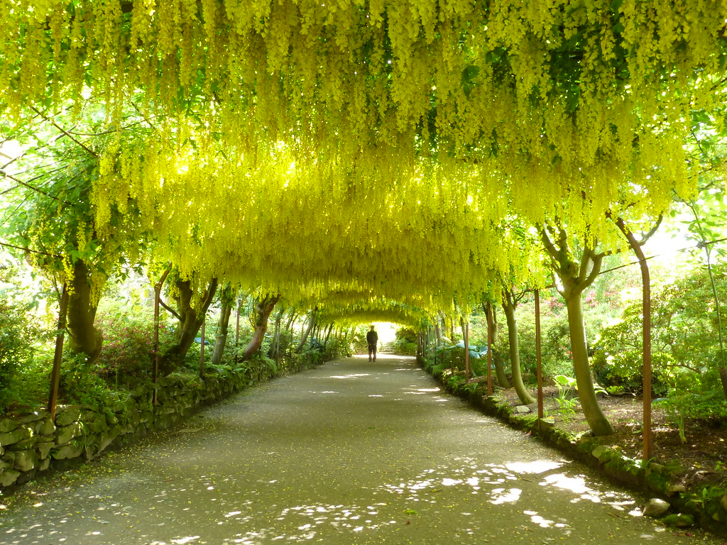 Pleasant P Laburnum Arch Bodnant Gardens  Joy Shakespeare  Flickr With Outstanding  P Laburnum Arch Bodnant Gardens  By Joy Shakespeare With Cool In The Night Garden Dinner Set Also Zen Garden Meaning In Addition Rattan Garden Loungers Uk And Garden Lines As Well As Swiss Garden Old Warden Additionally Russian Church Ennismore Gardens From Flickrcom With   Outstanding P Laburnum Arch Bodnant Gardens  Joy Shakespeare  Flickr With Cool  P Laburnum Arch Bodnant Gardens  By Joy Shakespeare And Pleasant In The Night Garden Dinner Set Also Zen Garden Meaning In Addition Rattan Garden Loungers Uk From Flickrcom