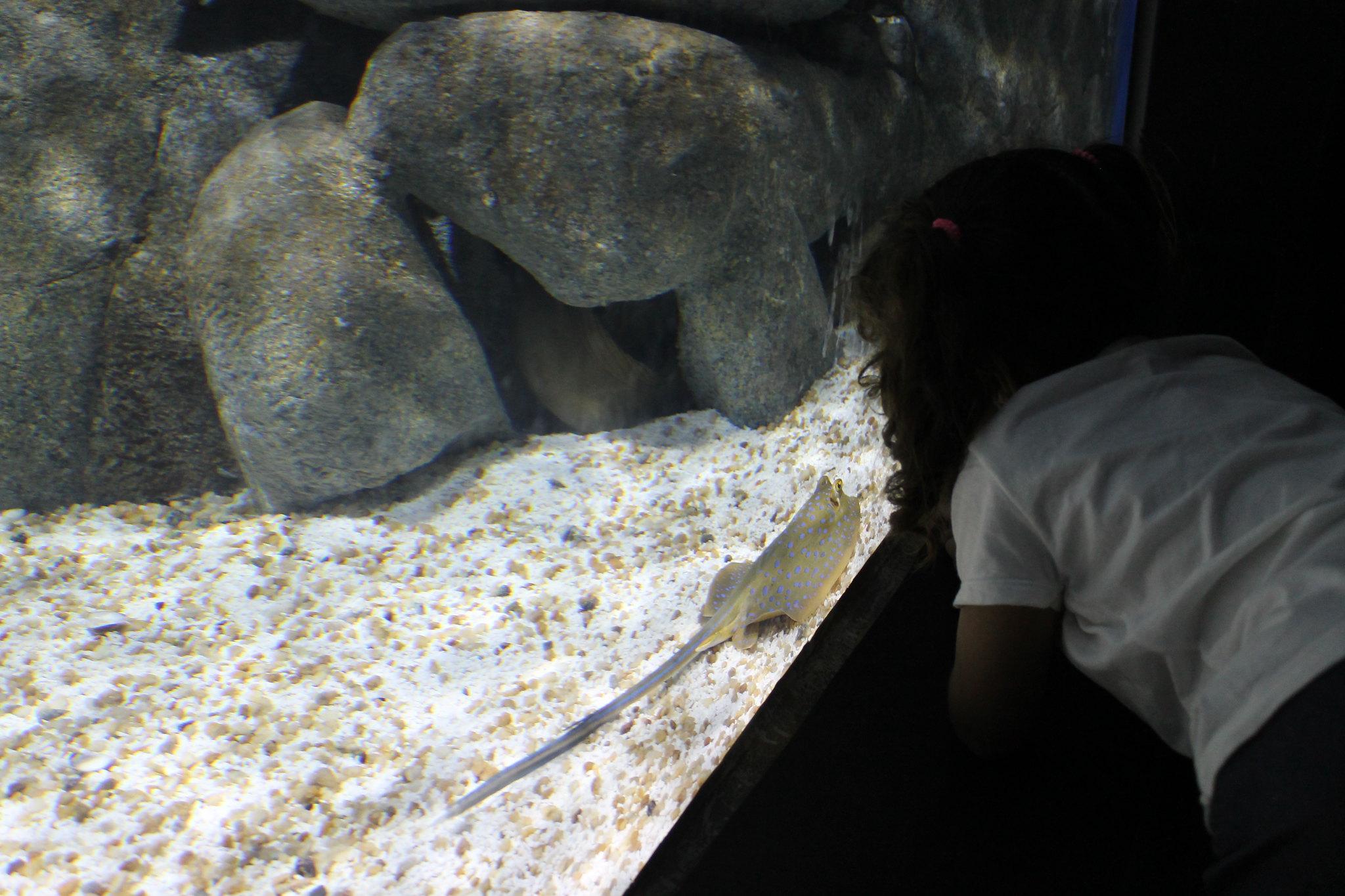 aquario3