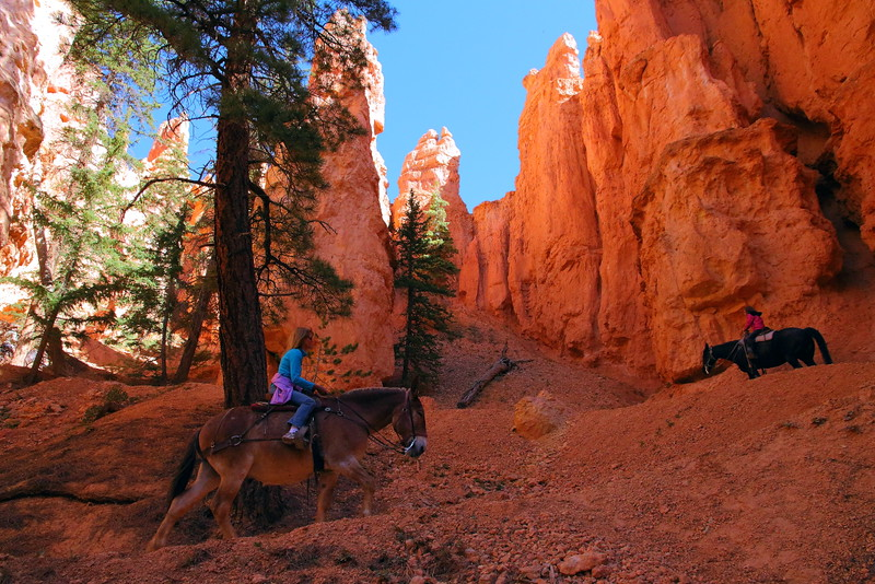 IMG_4771 Mule Ride on Peekaboo Trail, Bryce Canyon National Park