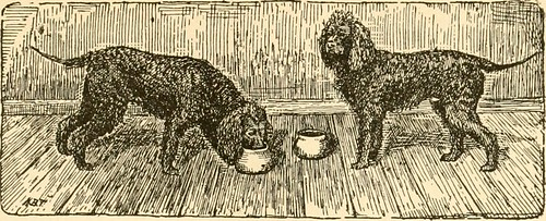 "Image from page 97 of ""Kennel secrets : how to breed, exhibit, and mannage dogs"" (1904) 