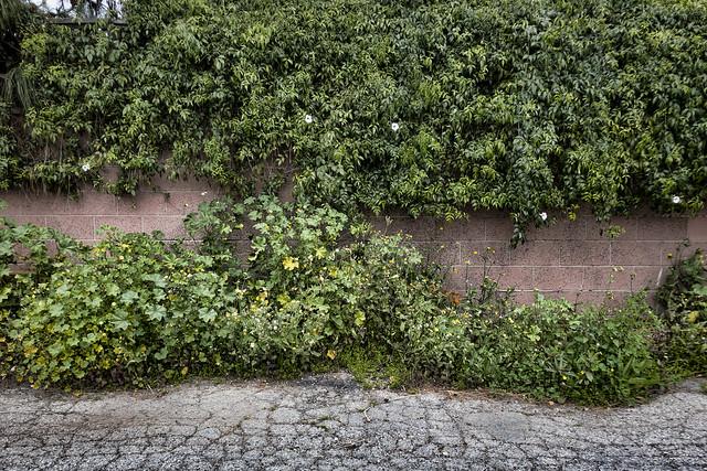 Alley weeds
