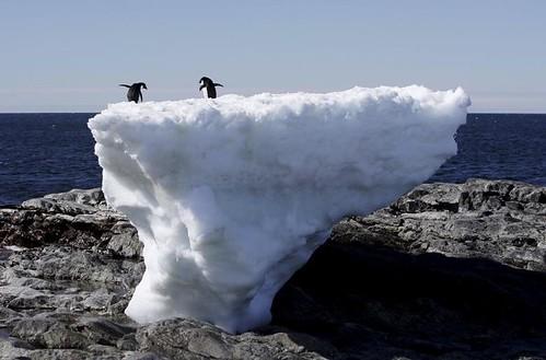 Antartica-01032017074359-1000x0