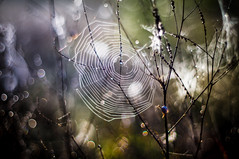 Web Gleam