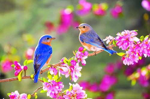 Весна птахи
