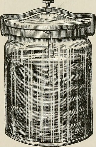 "Image from page 162 of ""Anatomical technology as applied to the domestic cat; an introduction to human, veterinary, and comparative anatomy"" (1882) 