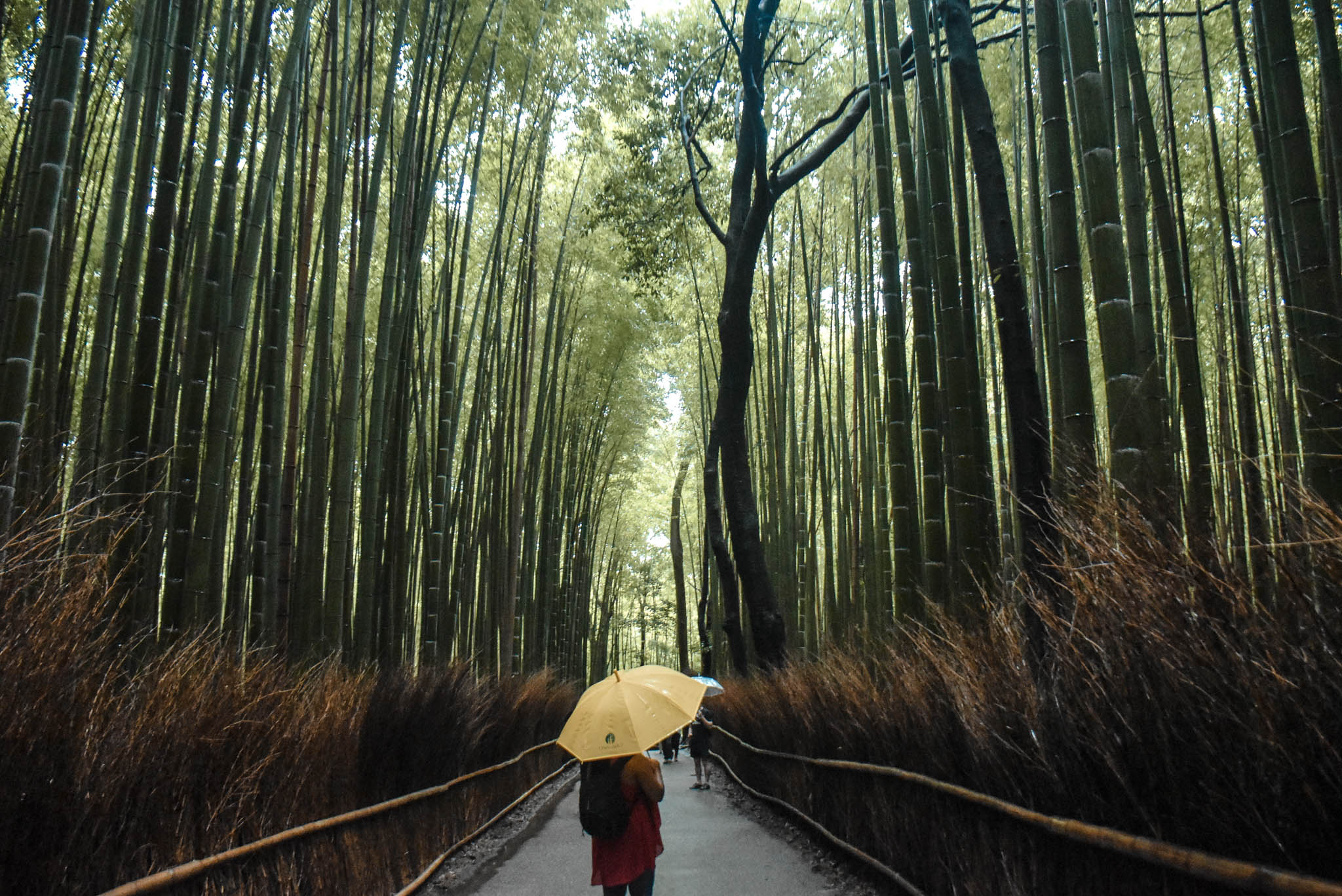 arashiyama 43 (1 of 1)