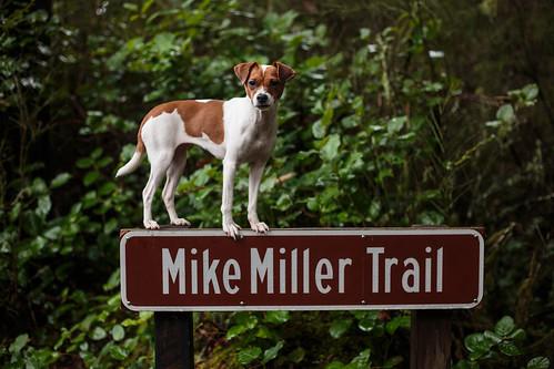Mike Miller February-3571