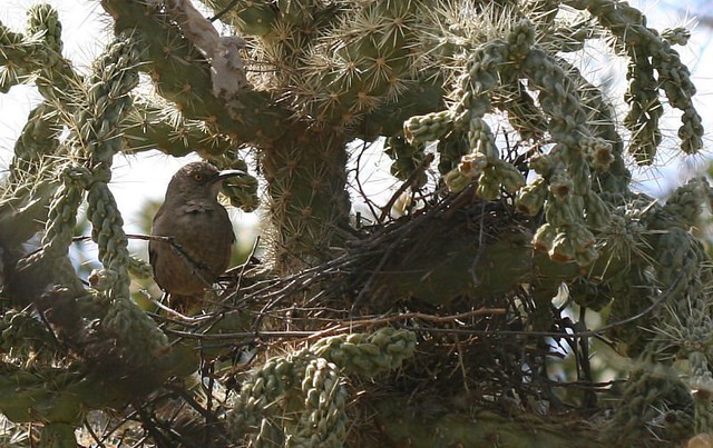 Kestrels 2018: Kestrels on a Fallen Branch (Calvendo Animals)