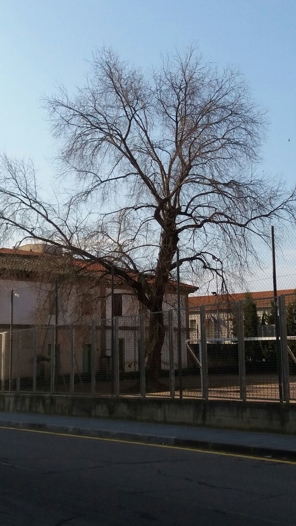 Los jardineros del ayuntamiento están llevando a cabo la campaña de poda de árboles que se extenderá hasta finales de este mes de marzo