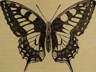 "Image from page 230 of ""Little folks in feathers and fur, and others in neither"" (1875) 