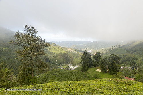 Beautiful Cameron Highlands - tea and flower capital of Malaysia | by Phuketian.S