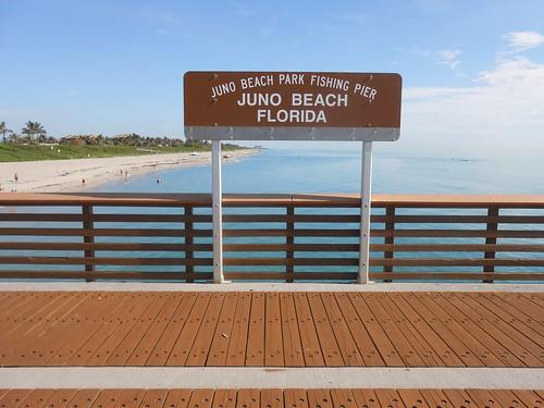 Juno beach park fishing pier latitude for Juno pier fishing report