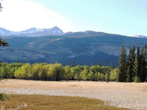 how to get to siffleur falls