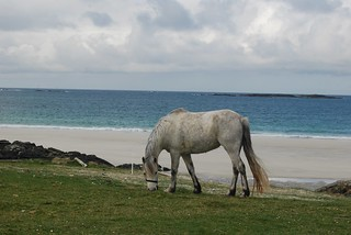 Pony grazing near the beach, Ballyconnelley  (Pic by Liam) | by jemartin03