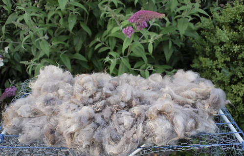 drying wool | by textile practice