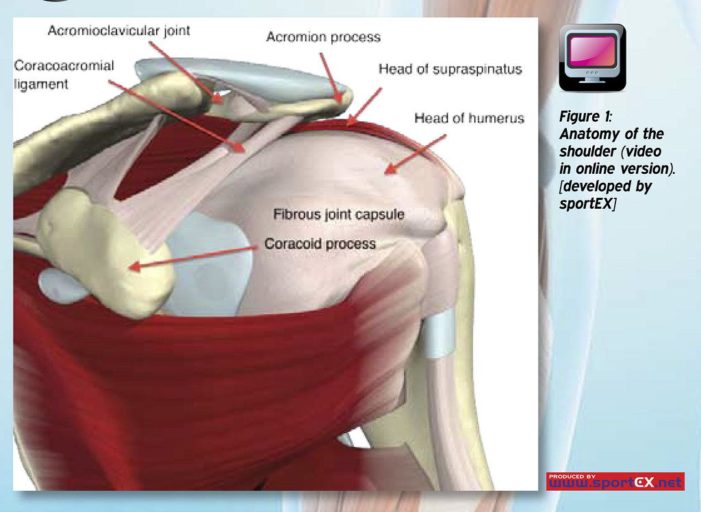 42dy21 Anatomy Of The Shoulder Sportex Journals Flickr