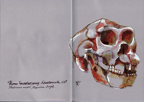 Homo Heidelbergensis Schoetensack