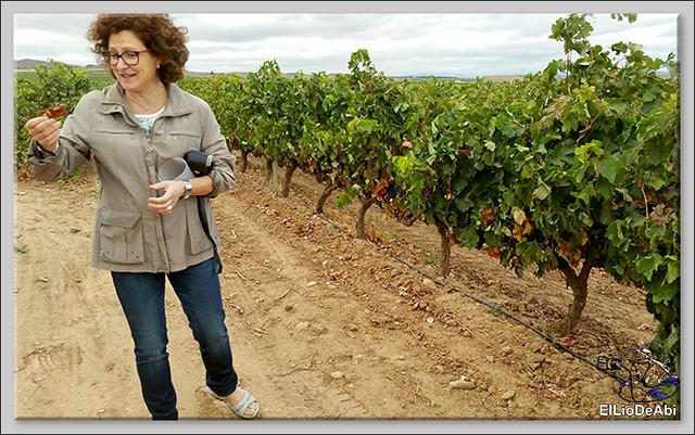Uvas y Vino haciendo turismo del Vino 5