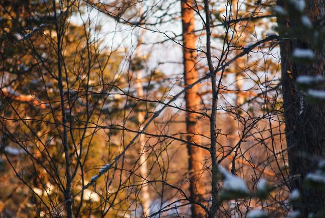 auringonlasku metsä