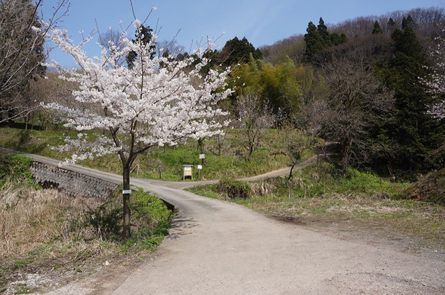 Thousand these cherry trees Village