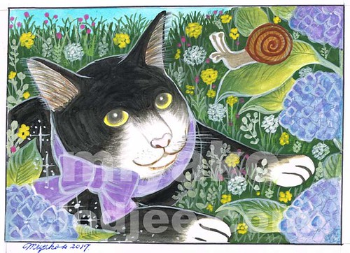 A Cat and a snail with hydrangea