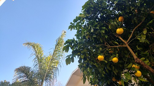 Orange & Palm
