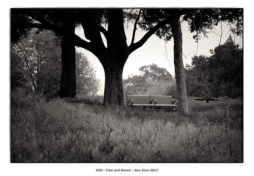 Tree and Bench | by Godfrey DiGiorgi